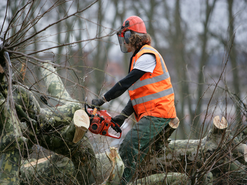 Picture of employee with orange safety vest splitting a down tree in New Bedford, MA