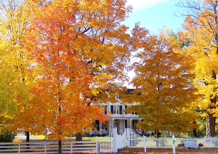 White farm house with two large golden trees in the front yard in New Bedford, MA